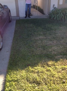 The grass in front of our house