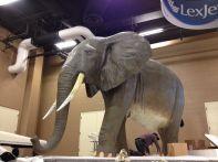 The mystery elephant, finally revealed.